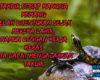 Kata Kata Bijak Harapan Awal Bulan November Quotes Pergantian Bulan Terbaru