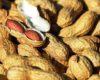 Harga Kacang Tanah Per KG Terbaru November 2020